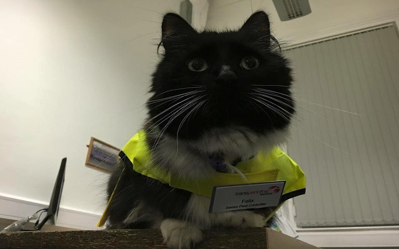 how to measure a cat for a harness