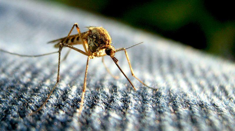Здоровье и красота: Вирус Зика больше не является международной угрозой