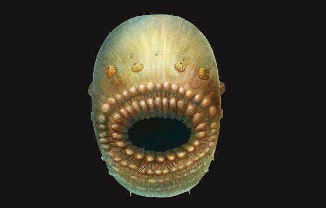 Saccorhytus coronarius
