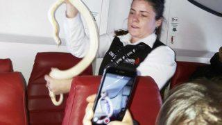 Змея в самолете. Когда сюжет фильма стал реальностью