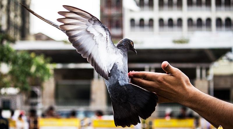 Общество: Пенсионерка получила штраф суммой £80 за то, что кормила голубей
