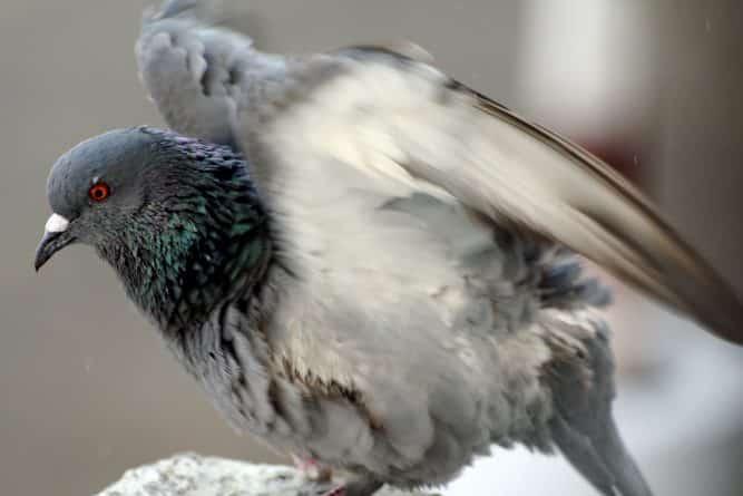 Технологии: Учёные выяснили, что птицы имеют генетическую память