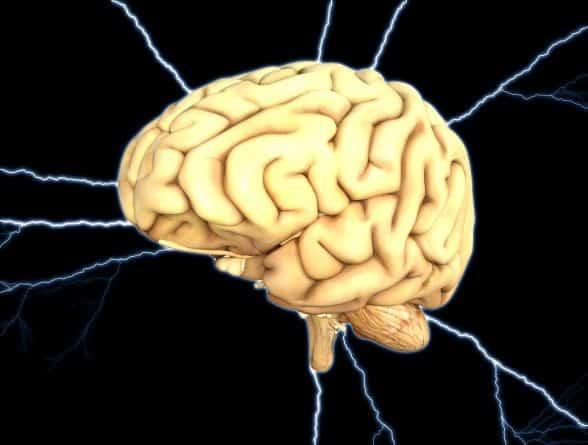Здоровье и красота: Ученые раскрыли особенности работы человеческого мозга