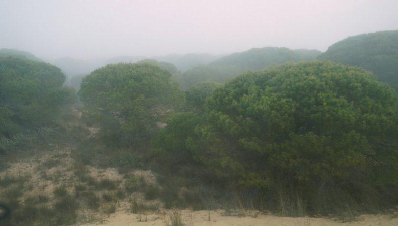 В мире: Пожар в Испании угрожает Национальному парку Доньяна