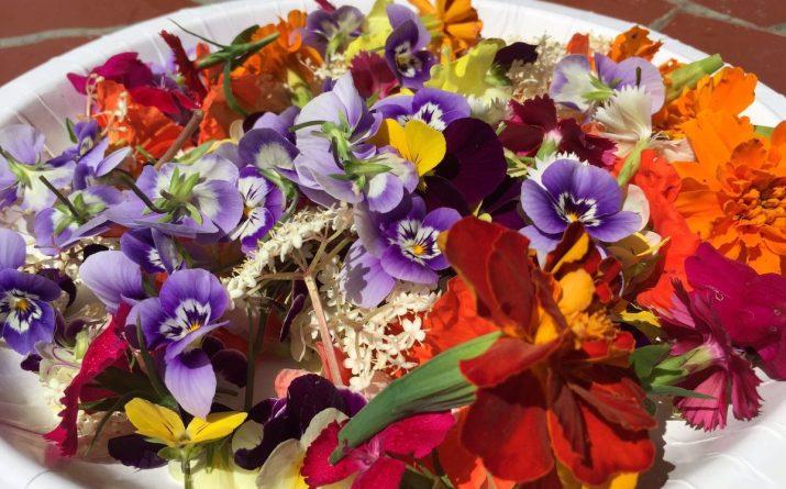 Досуг: Съедобные цветы- новый фуд-тренд этого лета
