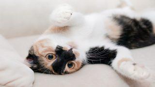 Ученые рассказали, зачем люди приручили кошек
