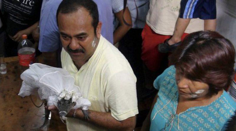 В мире: В Мексике мэр женился на крокодиле. В буквальном смысле (видео)