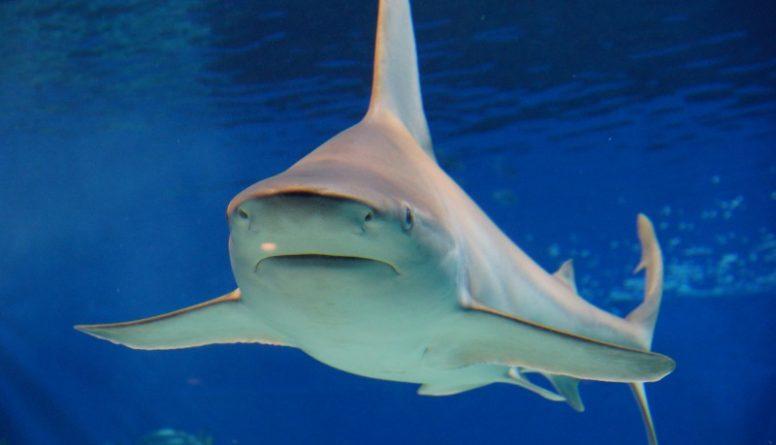 В мире: На американца напала акула-людоед
