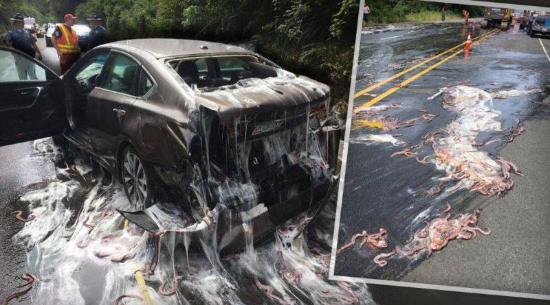 Без рубрики: Автомагистраль затопило водой, слизью и морскими угрями