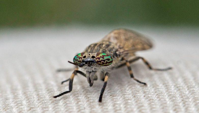 Общество: Горожан атакуют кусачие насекомые