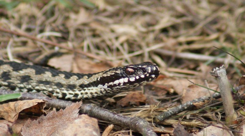 Здоровье и красота: В июле от укусов ядовитых змей пострадали 14 человек