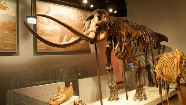 В мире: Гарвардский университет займется воскрешением мамонтов