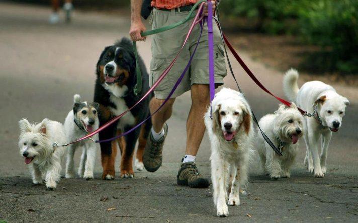 Закон и право: За выгул более 4-х собак британцев ждет штраф в £100