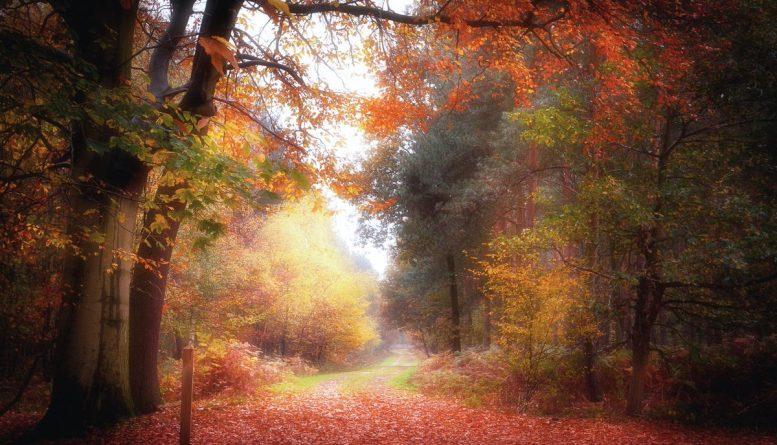 Галерея: Самые красивые места Британии: Шервудский лес