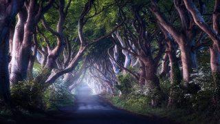 Самые красивые места Британии: мистический Дарк Хеджес