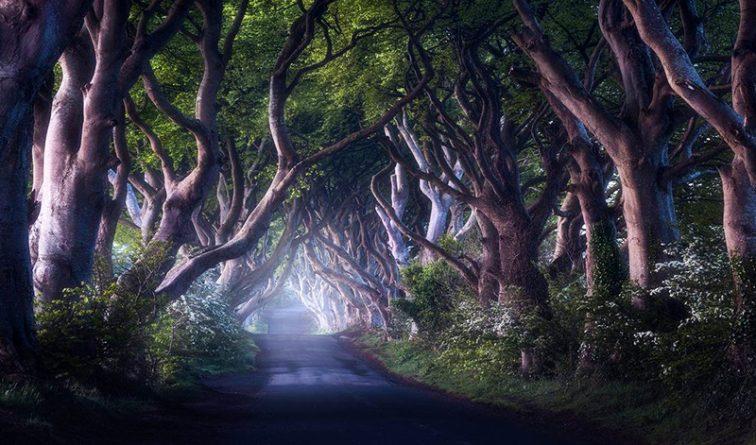 Досуг: Самые красивые места: мистический Дарк Хеджес