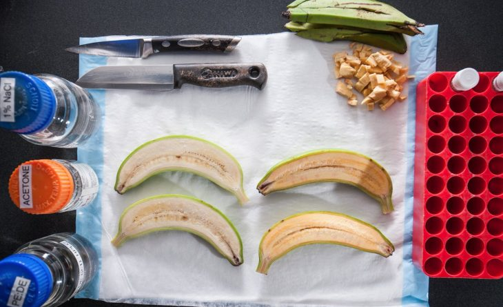 Здоровье и красота: Ученые изобрели банан, который может спасти тысячи жизней