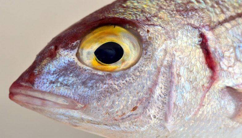 Общество: В британских реках расплодились рыбы-мутанты