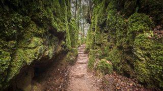 Самые красивые места Британии: загадочный лес Пазлвуд