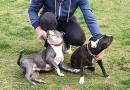 Двух собак зверски убили во дворе у хозяев