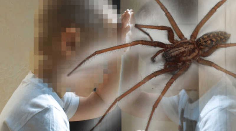 Происшествия: Отец наказал сына, засунув ему в рот паука