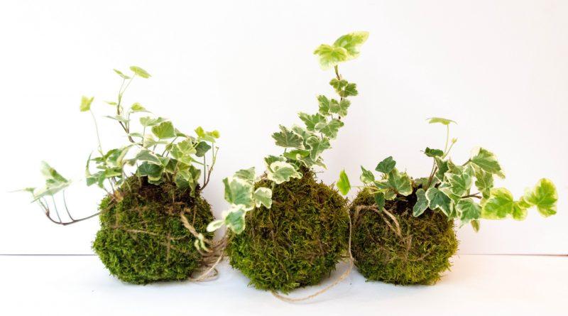 Лайфхаки и советы: Топ-5 комнатных растений, которые эффективно очищают воздух