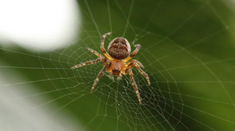 Лайфхаки и советы: Как прожить эту осень без пауков