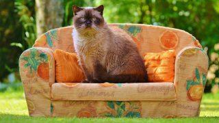 В Лондоне пройдет Фестиваль кошек