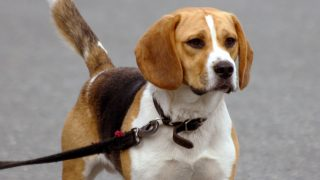 Собаку загрызли до смерти во время прогулки в парке