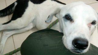 Собака, брошенная хозяином в аэропорту, умерла от