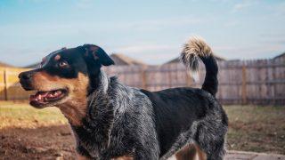 Мужчину оштрафовали на £1 тыс. за отказ убирать за своими собаками