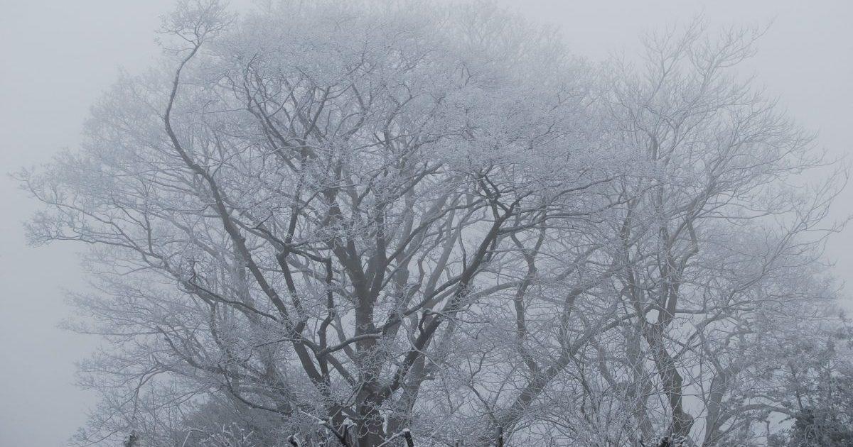 https://pixabay.com/ru/дерево-туман-мороз-англия-2540003/