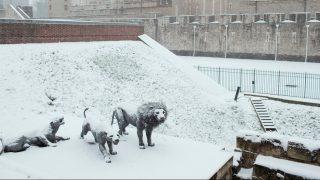 На Рождество синоптики обещают потепление вплоть до 13°C