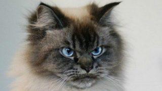 Самый злобный кот в мире покорил Интернет
