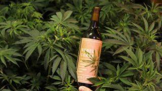 Винодельня в Калифорнии начнет продажи безалкогольного вина с каннабисом