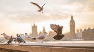 Колонки: Плюсы жизни в Англии