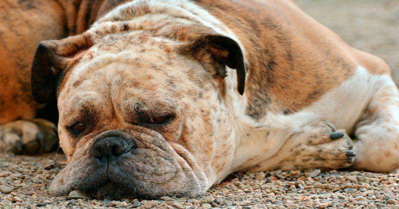 Общество: Женщина вызволила украденных собак из заточения на заброшенной ферме