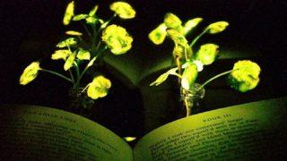 Растения заменят уличные фонари?