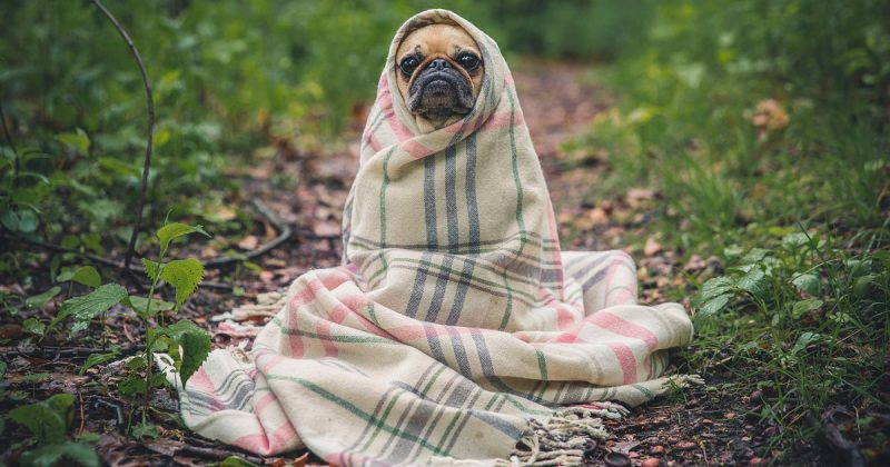 Досуг: Shoreditch Dog House приглашает всех скучающих по собачьим обнимашкам