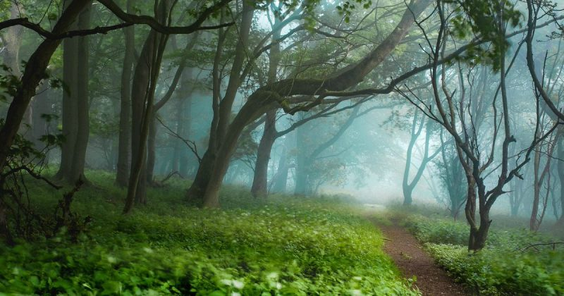 Галерея: Самые красивые места Британии: парк Ашридж