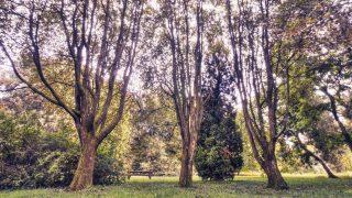Самые красивые места Британии: дендрарий Уэстонберт