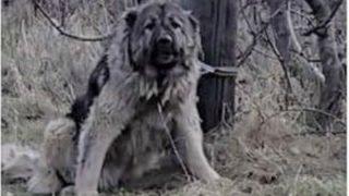 Общественность возмущена тем, что полицейский застрелил привязанную собаку