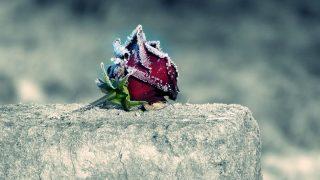 Женщину изнасиловали на кладбище средь бела дня