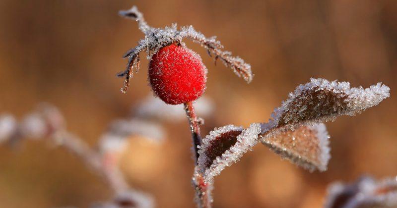Погода: После густого тумана в Британию придет холодная, ветреная и снежная погода