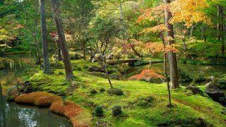 Райский уголок в Лондоне: очаровательный японский сад камней