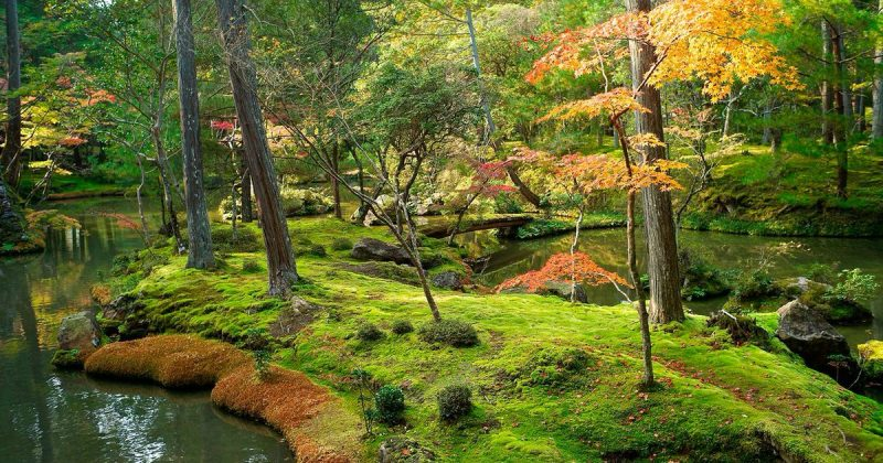 Досуг: Райский уголок в Лондоне: очаровательный японский сад камней