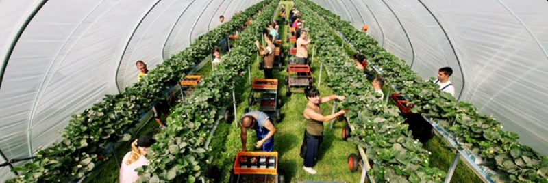 Brexit в действии: британским фермерам остро не хватает сезонных рабочих