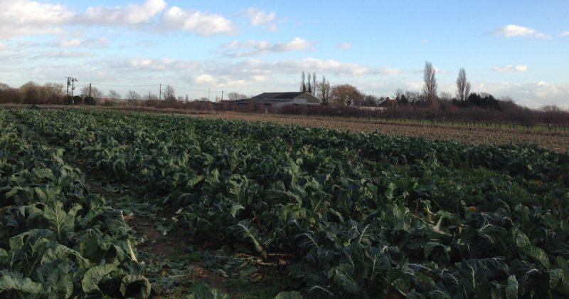 Общество: Британцы устроили состязание с восточноевропейскими работниками фермы