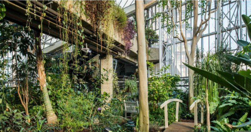 Досуг: Тропическая жемчужина в самом сердце Лондона поможет отдохнуть от шума мегаполиса