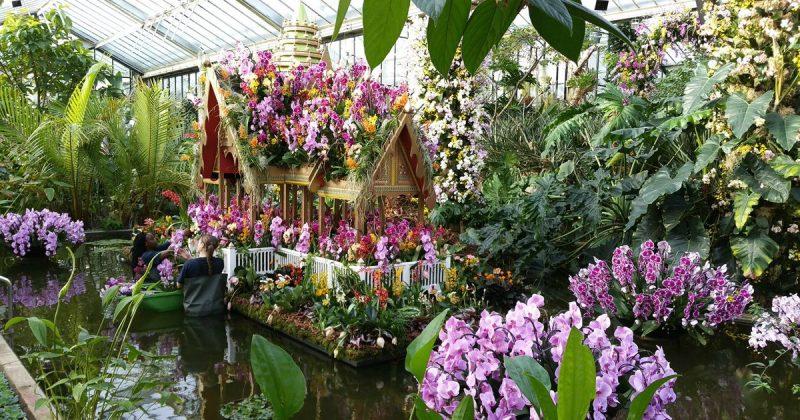 Досуг: Тропический рай посреди зимы: в Лондоне стартует фестиваль орхидей